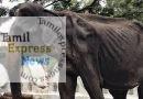 எலும்பும் தோலுமாக காட்சியளித்த 70 வயது டிக்கிரி யானை உயிரிழப்பு