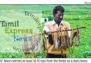 ஒரு எலி பிடித்தால் 80 ரூபாய் முதல் 100 ரூபாய் வரை வருமானம்